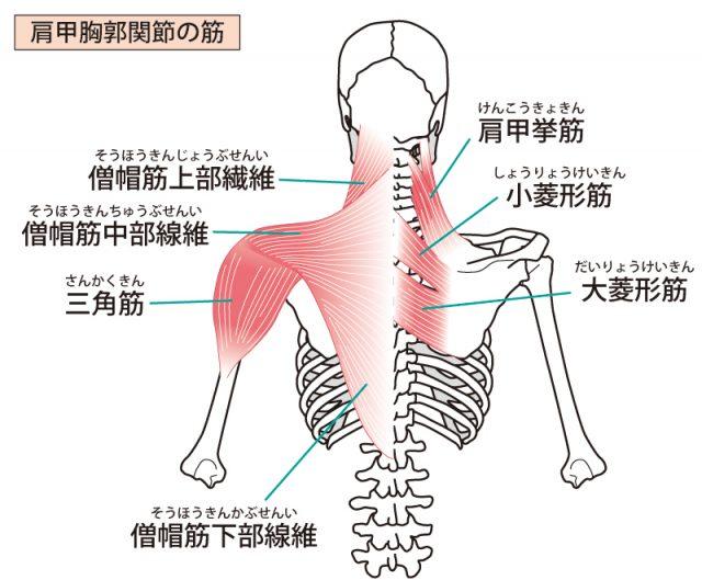 肩こりは骨盤・背骨・内臓の疲労を改善することで解消されます。