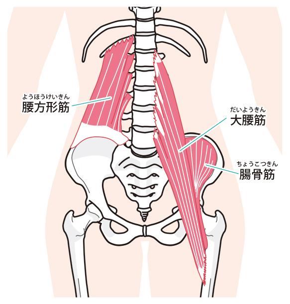 インナーマッスルを鍛えることはぎっくり腰の改善・再発防止につながります。